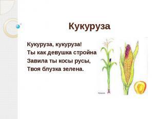 Кукуруза Кукуруза, кукуруза! Ты как девушка стройна, Завила ты косы русы, Твоя б