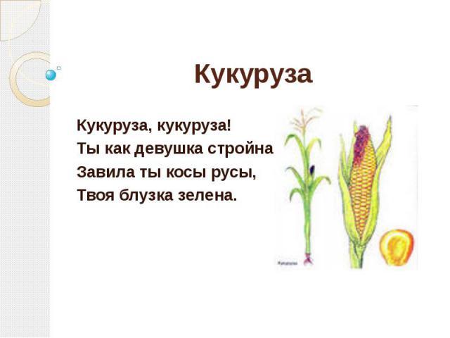 Кукуруза Кукуруза, кукуруза! Ты как девушка стройна, Завила ты косы русы, Твоя блузка зелена.