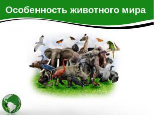 Особенность животного мира