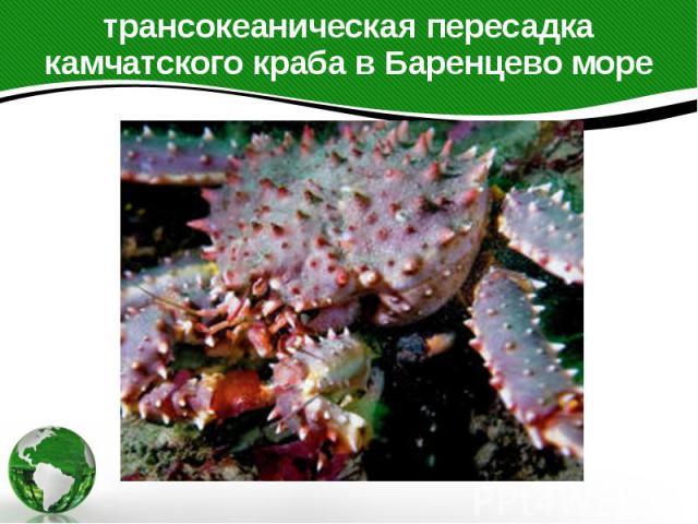 трансокеаническая пересадка камчатского краба в Баренцево море