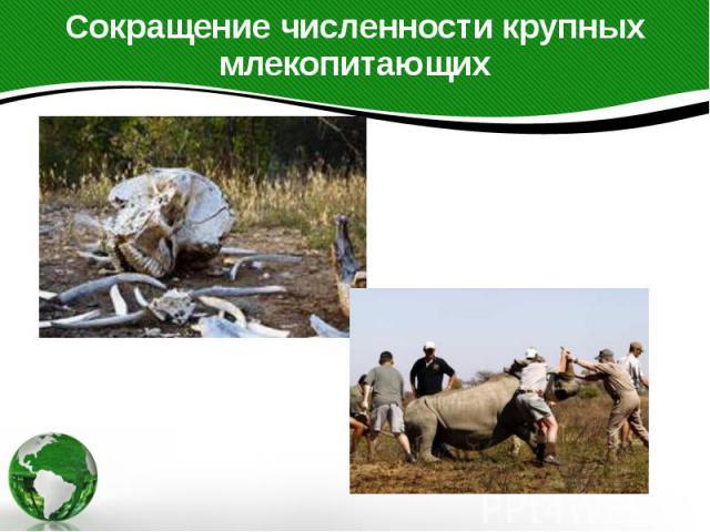Сокращение численности крупных млекопитающих