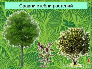 Сравни стебли растений