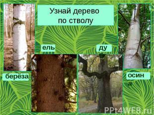 Узнай дерево по стволу