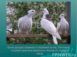 Была распространена и голубиная почта. Почтовых голубей приучали разносить письм