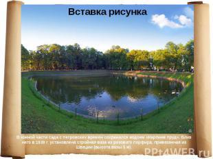 В южной части сада с петровских времен сохранился водоем «Карпиев пруд». Близ не