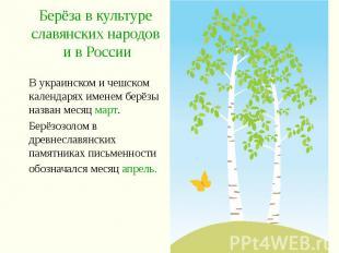 Берёза в культуре славянских народов и в России В украинском и чешском календаря