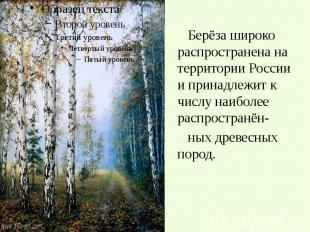 Берёза широко распространена на территории России и принадлежит к числу наиболее