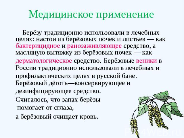 Медицинское применение Берёзу традиционно использовали в лечебных целях: настои из берёзовых почек и листьев— как бактерицидное и ранозаживляющее средство, а масляную вытяжку из берёзовых почек— как дерматологическое средство. Берёзовые …