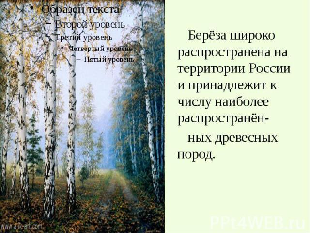 Берёза широко распространена на территории России и принадлежит к числу наиболее распространён- Берёза широко распространена на территории России и принадлежит к числу наиболее распространён- ных древесных пород.