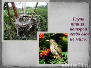 Глупа птица , которой гнездо свое не мило.