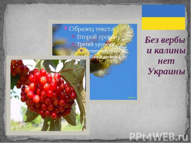 Без вербы и калины нет Украины