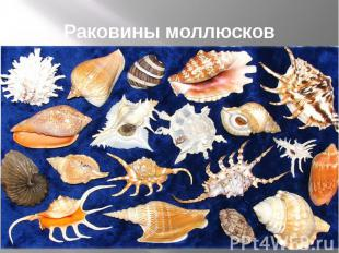 Раковины моллюсков
