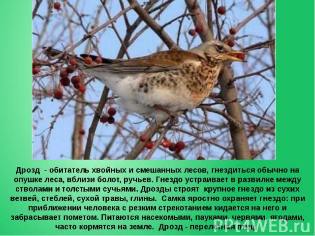 Дрозд - обитатель хвойных и смешанных лесов, гнездиться обычно на опушке леса, вблизи болот, ручьев. Гнездо устраивает в развилке между стволами и толстыми сучьями. Дрозды строят крупное гнездо из сухих ветвей, стеблей, сухой травы, глины. Самка яро…