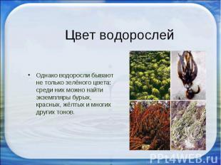 Однако водоросли бывают не только зелёного цвета: среди них можно найти экземпля
