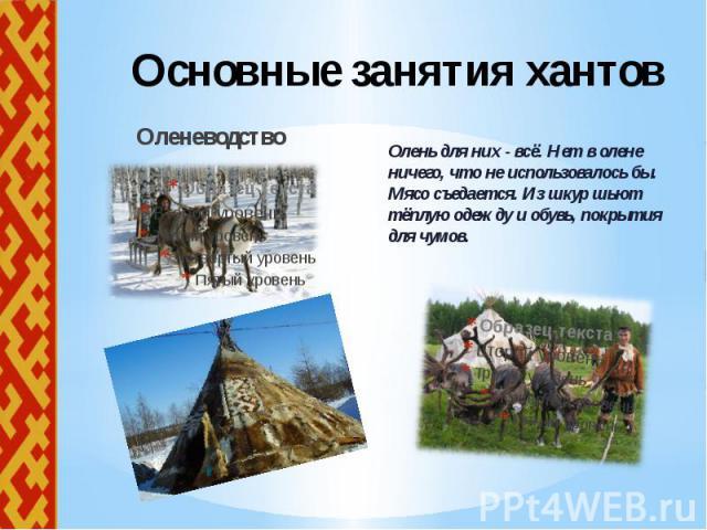 Основные занятия хантов Оленеводство