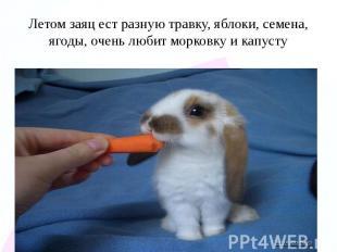 Летом заяц ест разную травку, яблоки, семена, ягоды, очень любит морковку и капу