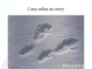 След зайца на снегу