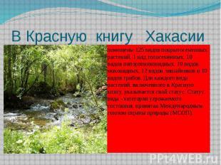 В Красную книгу Хакасии помещены 125 видов покрытосеменных растений, 1 вид голос