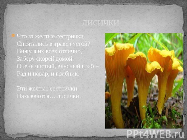 лисички Что за желтые сестрички Спрятались в траве густой? Вижу я их всех отлично, Заберу скорей домой. Очень чистый, вкусный гриб – Рад и повар, и грибник. Эти желтые сестрички Называются… лисички.