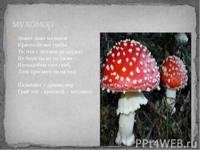 мухомор Знают даже малыши Красно-белые грибы Те, что с мухами не дружат. Не бери ты их на ужин – Несъедобен этот гриб, Хоть красавец он на вид. Называют с давних пор Гриб тот – красный… мухомор.