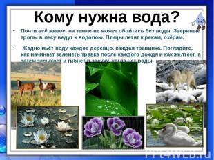 Почти всё живое на земле не может обойтись без воды. Звериные тропы в лесу ведут