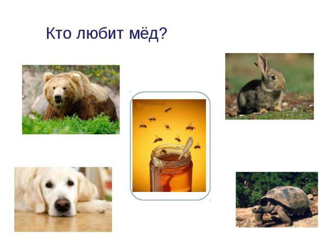 Кто любит мёд?
