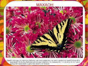 Давай спросим эту желтую бабочку: как она появилась на свет и выросла такой боль