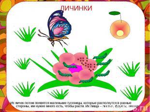 Из яичек потом появятся маленькие гусеницы, которые расползутся в разные стороны