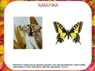 … бабочка! Словно после долгого-долгого сна она расправляет свои тонкие крылышки