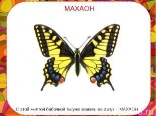 С этой желтой бабочкой ты уже знаком, ее зовут – МАХАОН. С этой желтой бабочкой