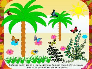 Бабочки любят тепло и цветы, поэтому больше всего бабочек живет на юге, в тропич