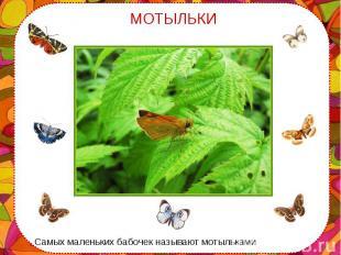 Самых маленьких бабочек называют мотыльками Самых маленьких бабочек называют мот