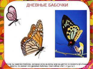 Если ты заметил бабочку, которая села на ветку или на цветок и сложила крылышки