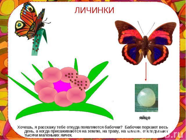 Хочешь, я расскажу тебе откуда появляются бабочки? Бабочки порхают весь день, а когда присаживаются на землю, на траву, на камень, откладывают тысячи маленьких яичек. Хочешь, я расскажу тебе откуда появляются бабочки? Бабочки порхают весь день, а ко…