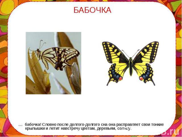 … бабочка! Словно после долгого-долгого сна она расправляет свои тонкие крылышки и летит навстречу цветам, деревьям, солнцу. … бабочка! Словно после долгого-долгого сна она расправляет свои тонкие крылышки и летит навстречу цветам, деревьям, солнцу.