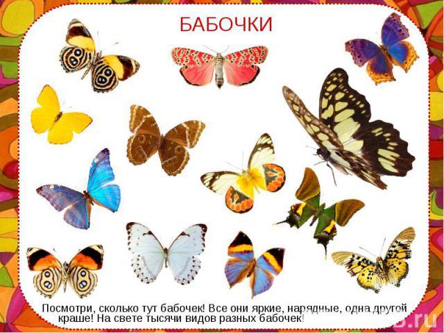 Посмотри, сколько тут бабочек! Все они яркие, нарядные, одна другой краше! На свете тысячи видов разных бабочек! Посмотри, сколько тут бабочек! Все они яркие, нарядные, одна другой краше! На свете тысячи видов разных бабочек!