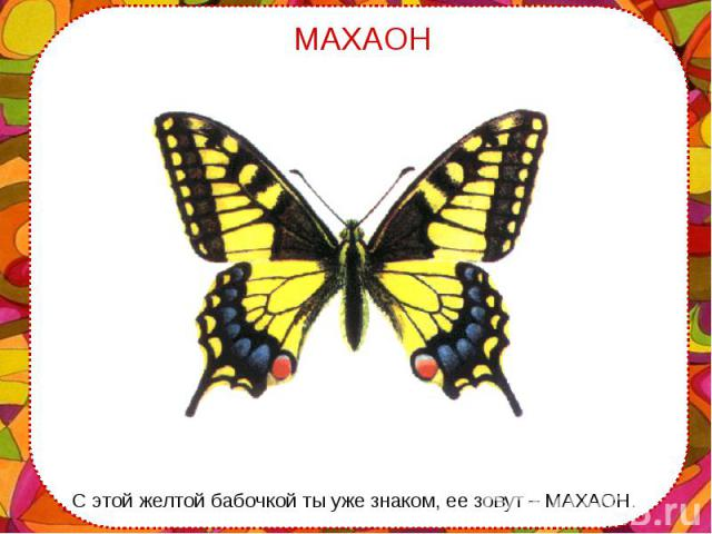 С этой желтой бабочкой ты уже знаком, ее зовут – МАХАОН. С этой желтой бабочкой ты уже знаком, ее зовут – МАХАОН.
