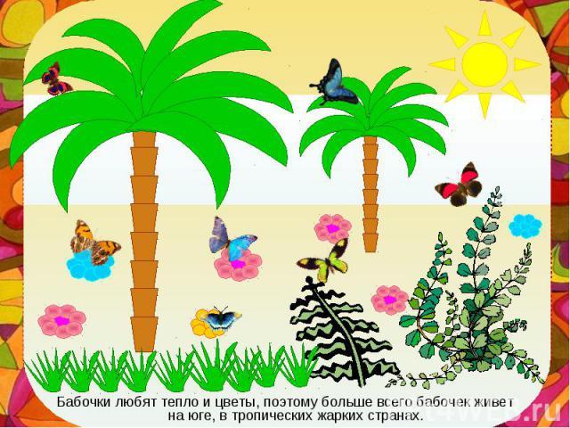 Бабочки любят тепло и цветы, поэтому больше всего бабочек живет на юге, в тропических жарких странах. Бабочки любят тепло и цветы, поэтому больше всего бабочек живет на юге, в тропических жарких странах.