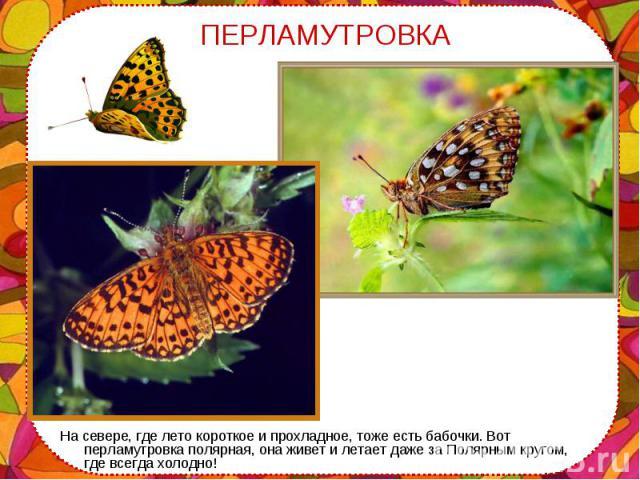 На севере, где лето короткое и прохладное, тоже есть бабочки. Вот перламутровка полярная, она живет и летает даже за Полярным кругом, где всегда холодно! На севере, где лето короткое и прохладное, тоже есть бабочки. Вот перламутровка полярная, она ж…