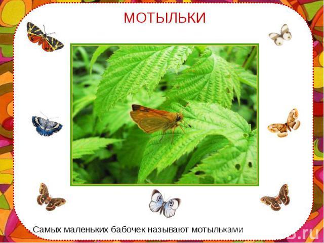 Самых маленьких бабочек называют мотыльками Самых маленьких бабочек называют мотыльками