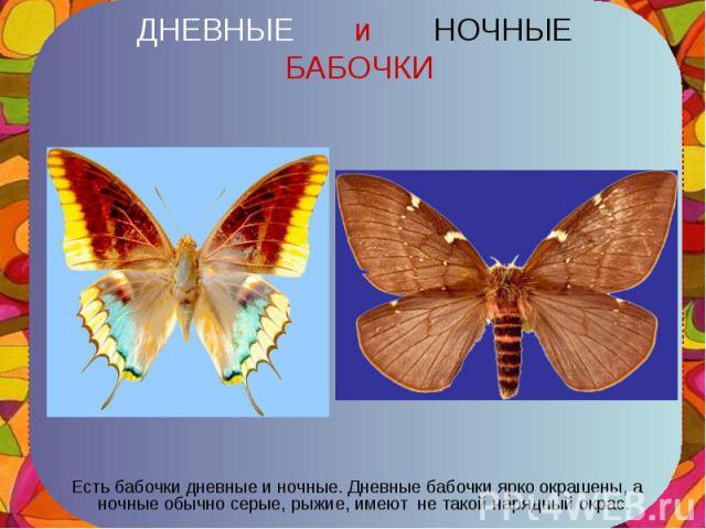 Есть бабочки дневные и ночные. Дневные бабочки ярко окрашены, а ночные обычно серые, рыжие, имеют не такой нарядный окрас. Есть бабочки дневные и ночные. Дневные бабочки ярко окрашены, а ночные обычно серые, рыжие, имеют не такой нарядный окрас.