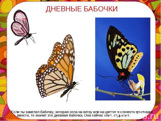 Если ты заметил бабочку, которая села на ветку или на цветок и сложила крылышки вместе, то значит это дневная бабочка. Она сейчас спит, отдыхает. Если ты заметил бабочку, которая села на ветку или на цветок и сложила крылышки вместе, то значит это д…