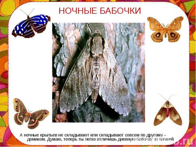 А ночные крыльев не складывают или складывают совсем по другому – домиком. Думаю, теперь ты легко отличишь дневную бабочку от ночной. А ночные крыльев не складывают или складывают совсем по другому – домиком. Думаю, теперь ты легко отличишь дневную …