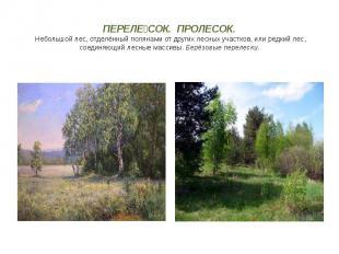 ПЕРЕЛЕ СОК. ПРОЛЕСОК. Небольшой лес, отделённый полянами от других лесных