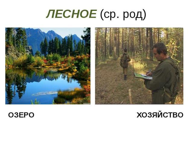 ЛЕСНОЕ (ср. род)