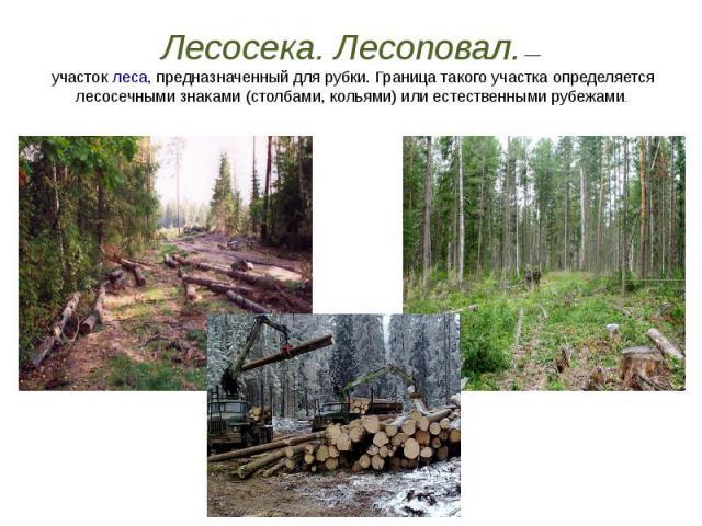 Лесосека. Лесоповал.— участоклеса, предназначенный для рубки. Граница такого участка определяется лесосечными знаками (столбами, кольями) или естественными рубежами.