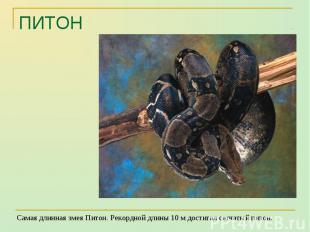 Самая длинная змея Питон. Рекордной длины 10 м достигал сетчатый питон. Самая дл