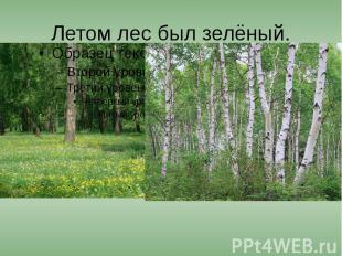 Летом лес был зелёный.