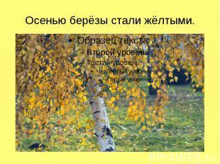 Осенью берёзы стали жёлтыми.