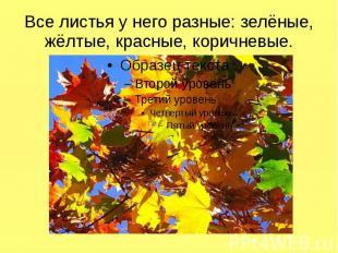 Все листья у него разные: зелёные, жёлтые, красные, коричневые.